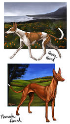 Sighthound Studies #1 by mJackson
