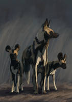African wild dogs by viivihal