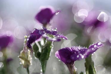 Purple dew by Piipsy