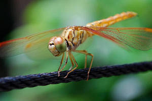Dragonfly Photo 3 by blookz