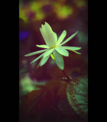 Flora - Photo 1 by blookz