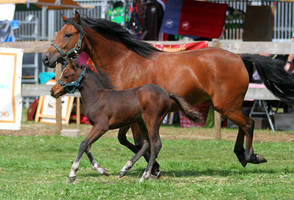 Mare and foal 2 by Kiwiaa