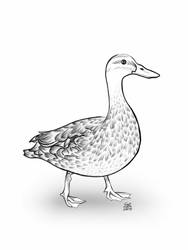 Requested Duck by Photomentation