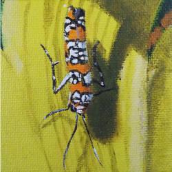 Ailanthus Webworm Moth by DuilliathCoF