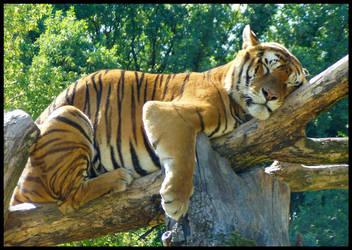 Tiger by Londonbaby