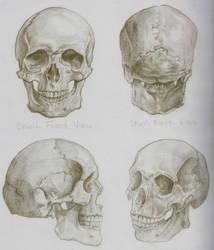 The Skull by sketchtastrophe