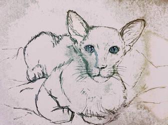 Siamese kitten by KateHodges