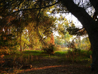 Autumn Stroll by DaisyDinkle
