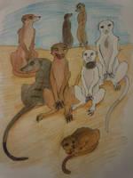 OC Meerkats by Aniju-Aura