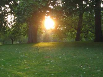 Green Park by patryssya