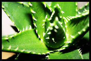 Cactus by cstm