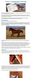 Tutorial: Horse Sketching by Devynn