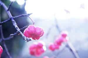 Pink by ElyneNoir
