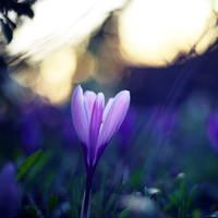 Spring Sunset by ElyneNoir