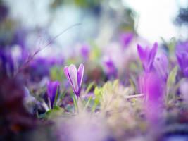Purple by ElyneNoir