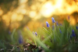 Sunrise in Spring by ElyneNoir