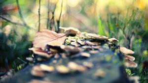 029 - Autumn III by ElyneNoir