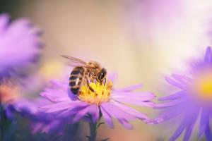 72 - Bee by ElyneNoir