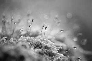 86 - Sprinkles by ElyneNoir