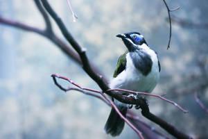 124 - Angry Bird by ElyneNoir