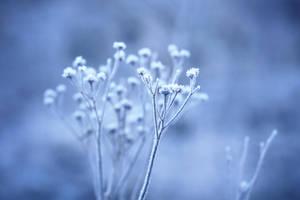 128 - Winter Blues II by ElyneNoir