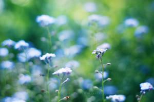 257 - Blue Dots by ElyneNoir