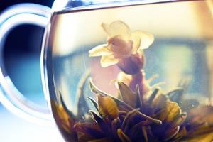 354 - Blooming by ElyneNoir
