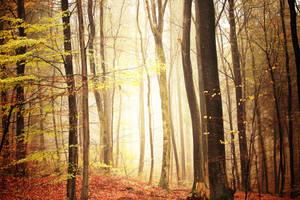 365 - Glowing Autumn by ElyneNoir