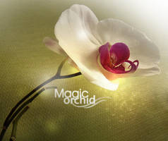magic orchid by Annyduck