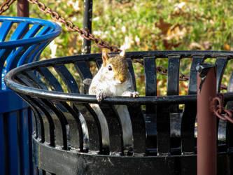 Squirrel by RanzidBlud