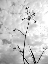 La fleurs anonyme by Giles-artsphotos