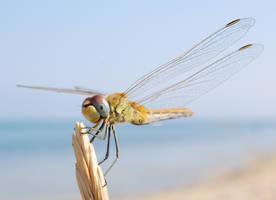 Dragonfly 10 by Thereska