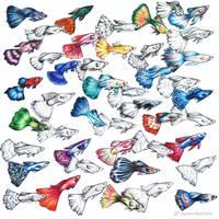 Fish Pattern by aquacobalamin