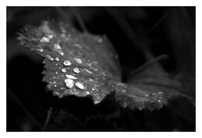 Droplets by Faylinn