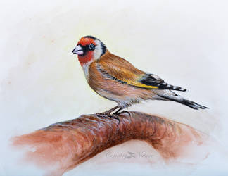 Goldfinch in watercolour by Countrynature