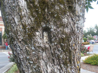Outlet in a Tree by ridley100