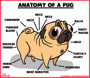 Anatomy of a Pug by SnazzyDoodle