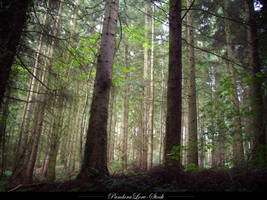 Forest 02 by AnitaJoy-Stock