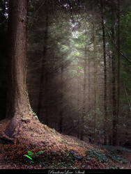 Forest 07 by AnitaJoy-Stock