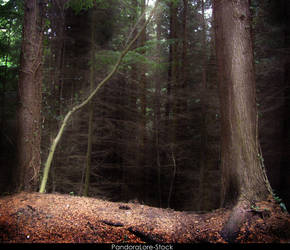 Forest 25 by AnitaJoy-Stock