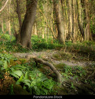 Forest 39 by AnitaJoy-Stock
