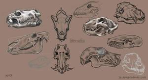 Animal Skulls Set by Decadia