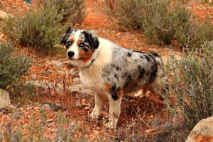 Desert Doggie by Celem
