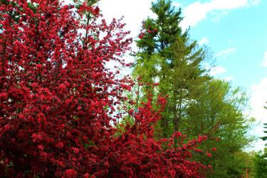 Red Tree by Celem