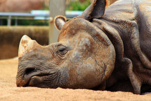 Sleeping Rhino by Celem