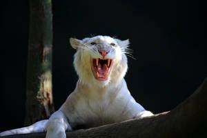 Stock: Say Roar by Celem
