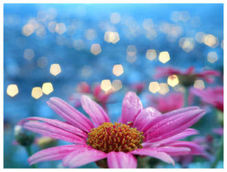 Flower bokeh by zentenophotography