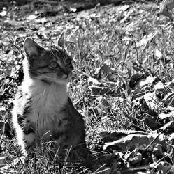 kitten by Furious--Angel