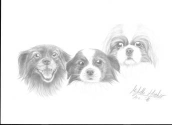 Christmas Dogs by Zoroha