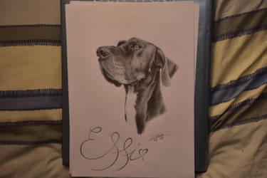 Effi - Great Dane by Zoroha